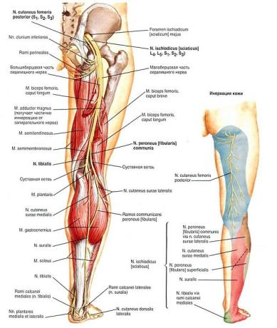 recorrido nervio ciático