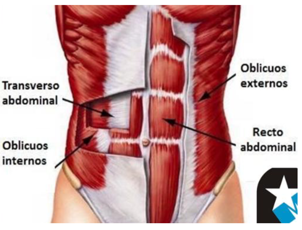 calambres musculares abdominales