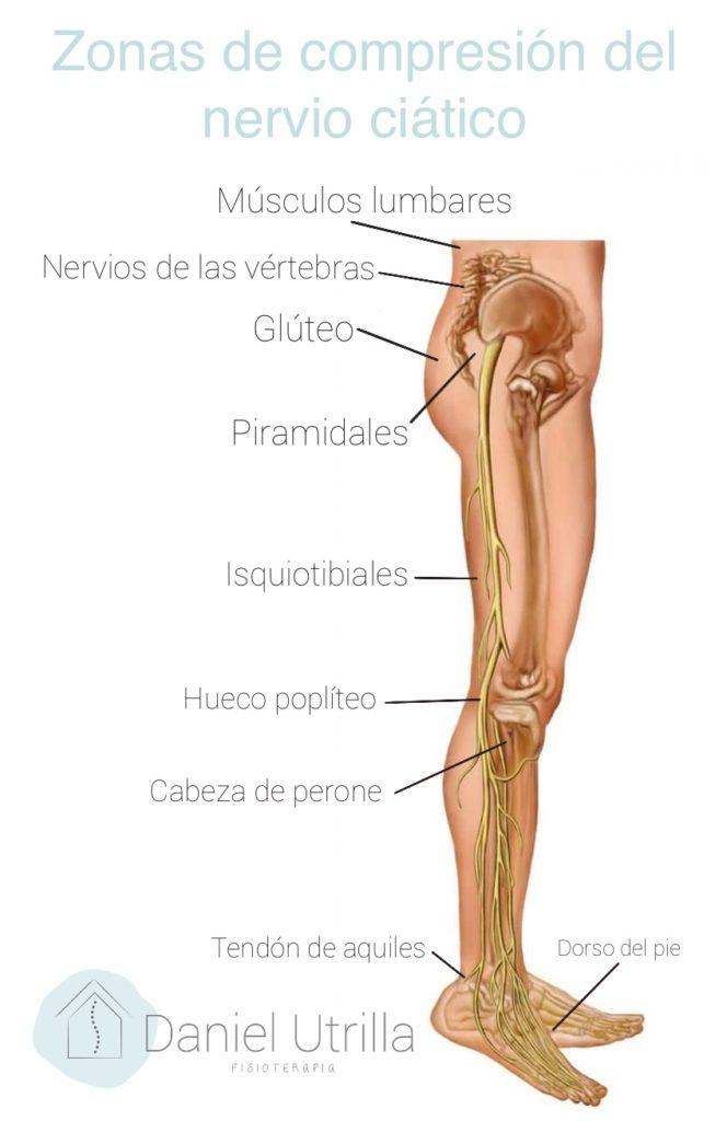 Anatomía del nervio ciático